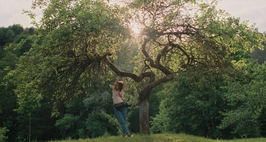 a girl at the branch of a tree at sunset